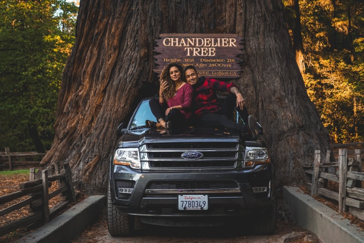 San francisco to seattle road trip the kris collective first we stopped at the chandelier tree a 276 ft tall drive thru tree that just barely let our suv through aloadofball Image collections